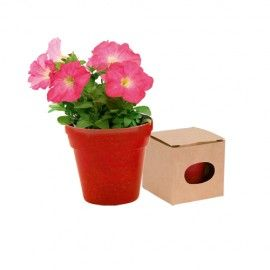 MACETERO BIODEGRADABLE CON SEMILLAS DE PETUNIA